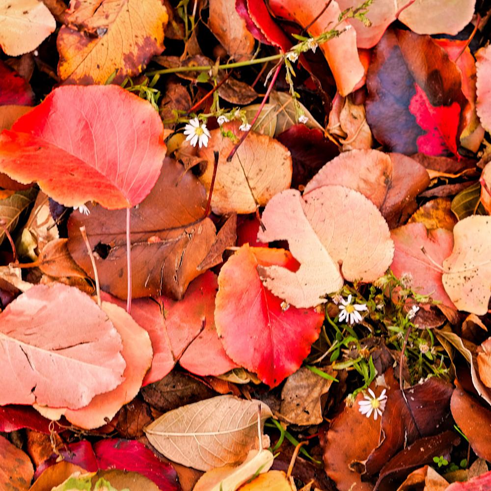 Fall colors 23 kyycze