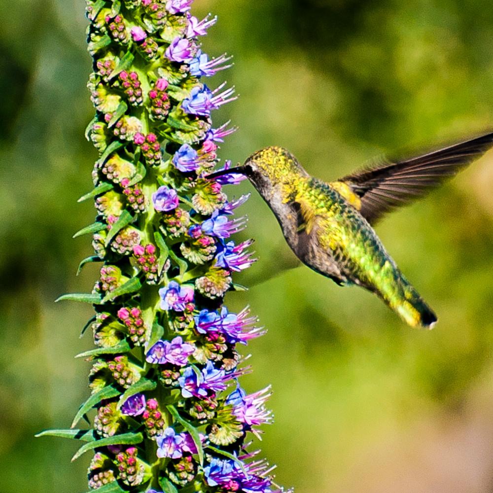Kaylee s hummingbird v3n3cm