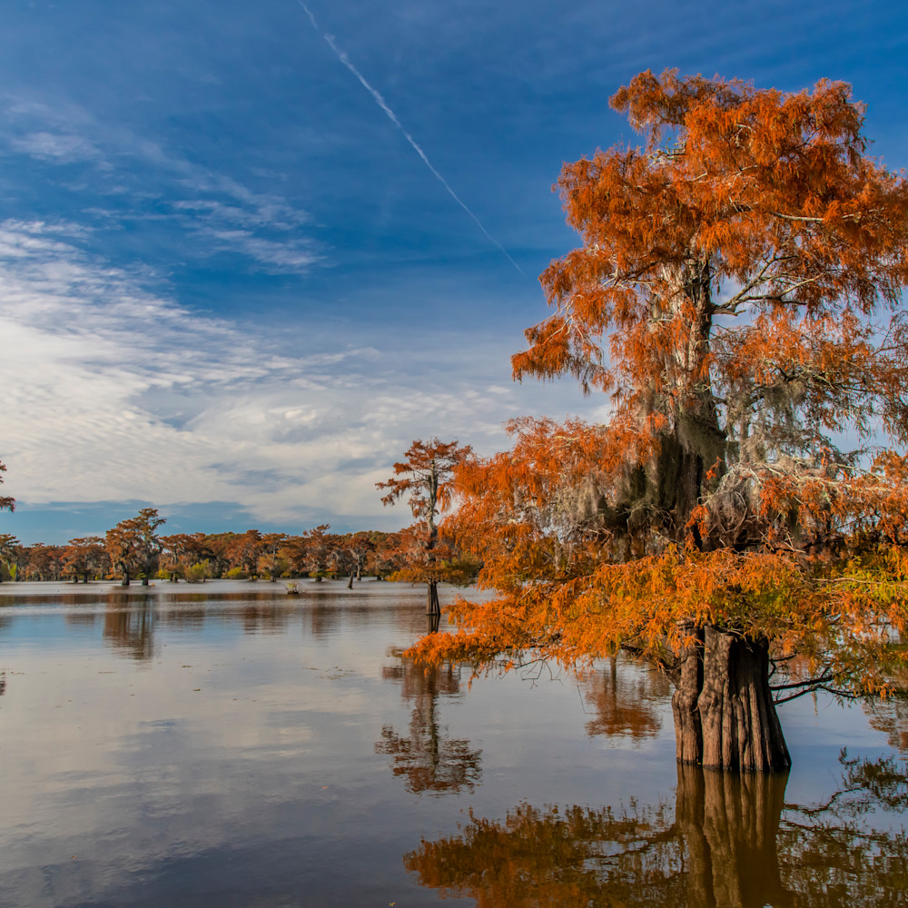 Andy crawford photography henderson swamp 3 s4wvrn