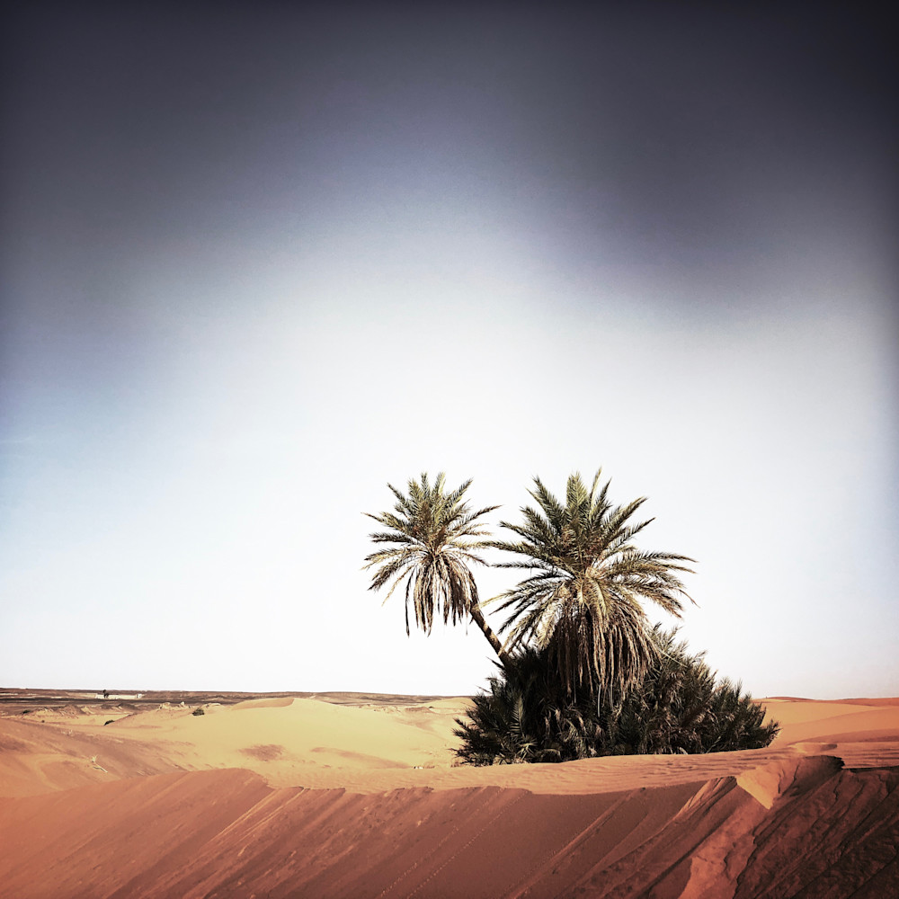 Palms sahara zgxqvs