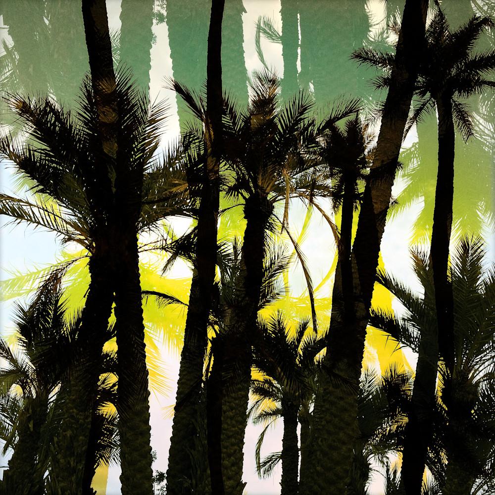 Palm oasis fuayjl