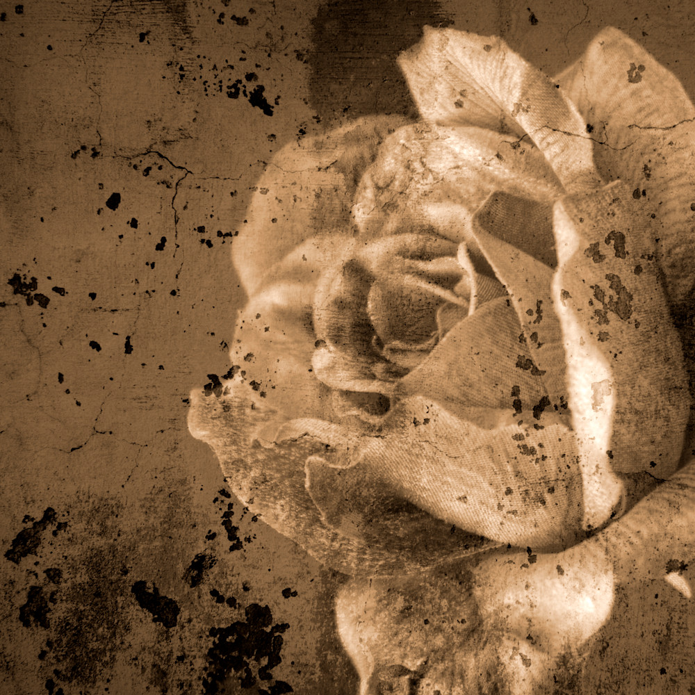 Vintage rose   sepia copy kdlvwd