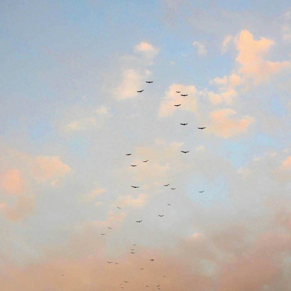 Dscn1065 vulture flock s3v12a