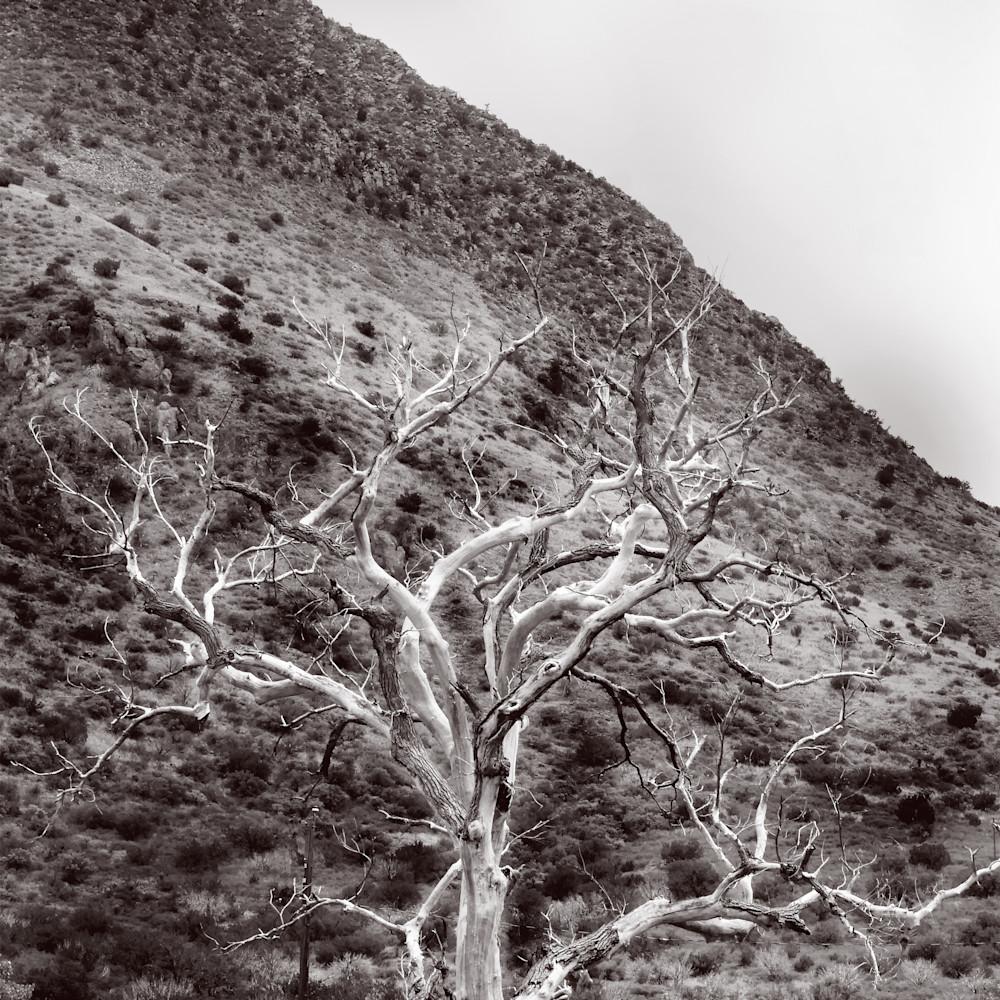 Dscn2079 dead tree zb1h7e