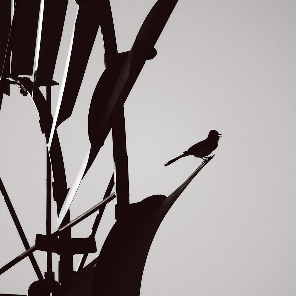 Dscn0911 2 bird windmill fqyn0q