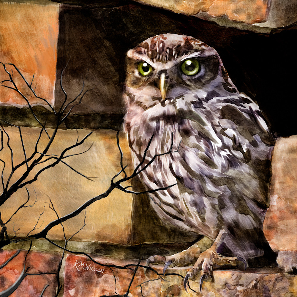 Archimedes the owl mibwpt