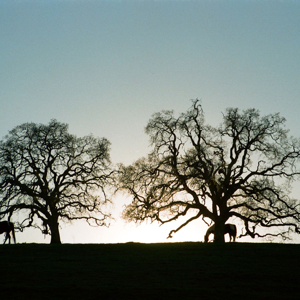 002 trees with horses umcre7
