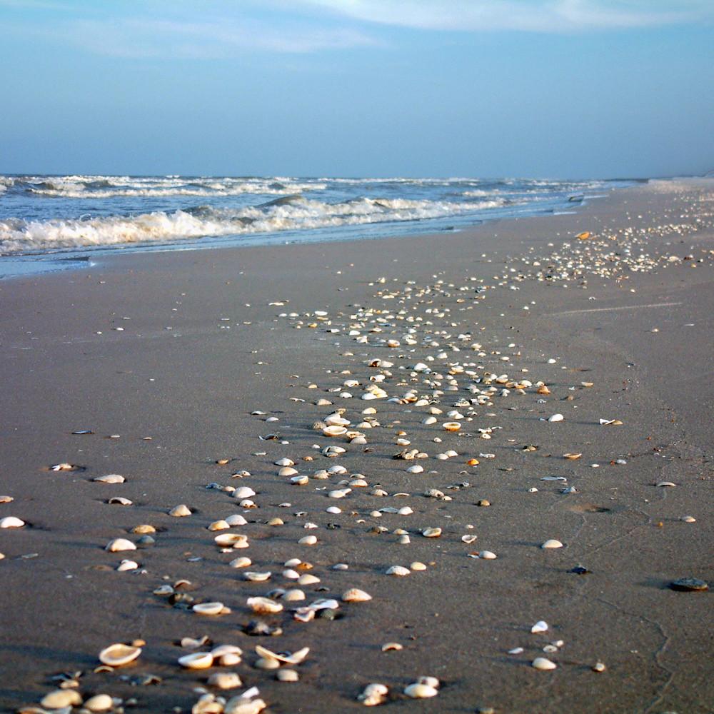 Mphillip shells w07zi3