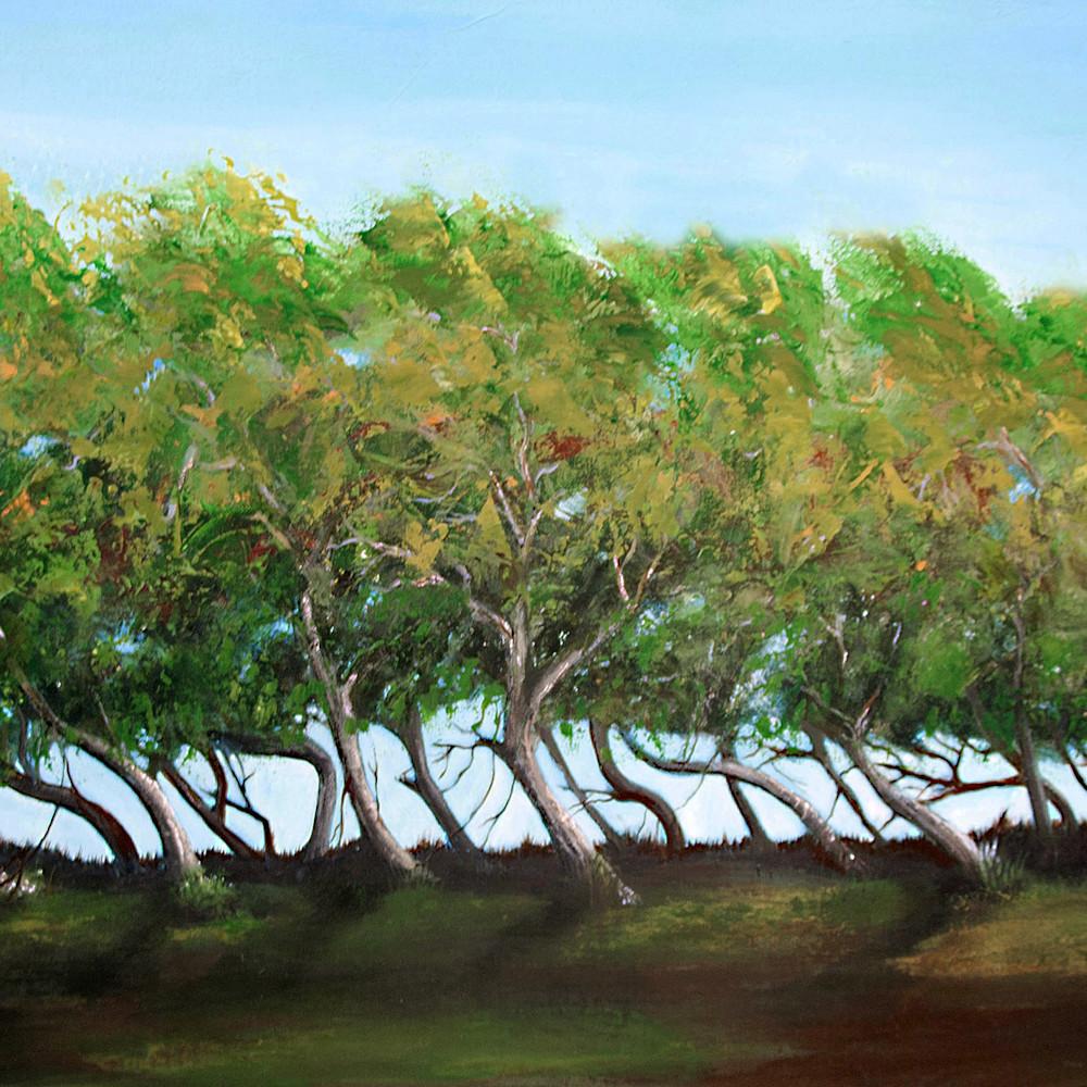 Mphillip   windswept oaks zjcdsc