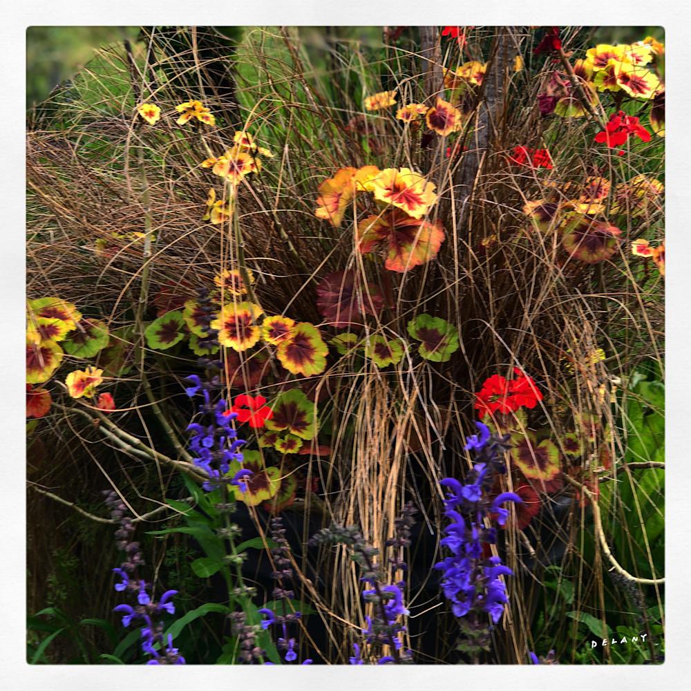 F wildflowers2019 5 nuwflm