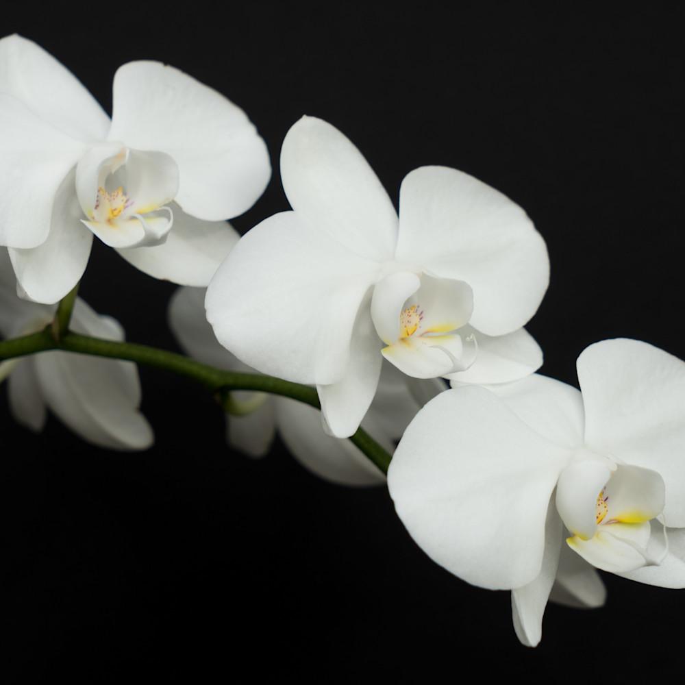 White on black qajdny