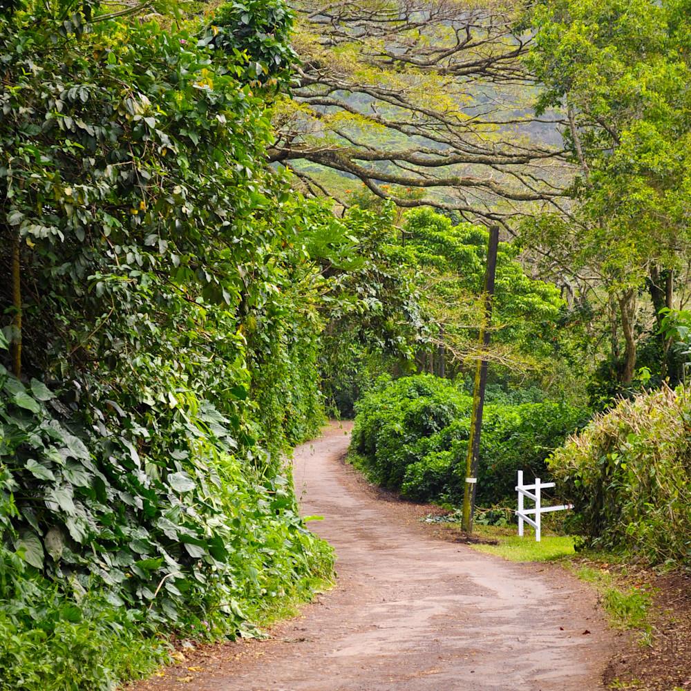 The road less traveled pye71b