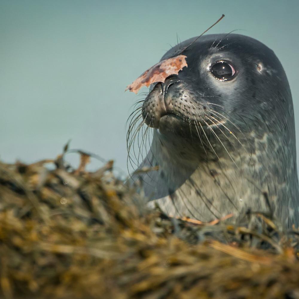 Seal leaf rpkek5