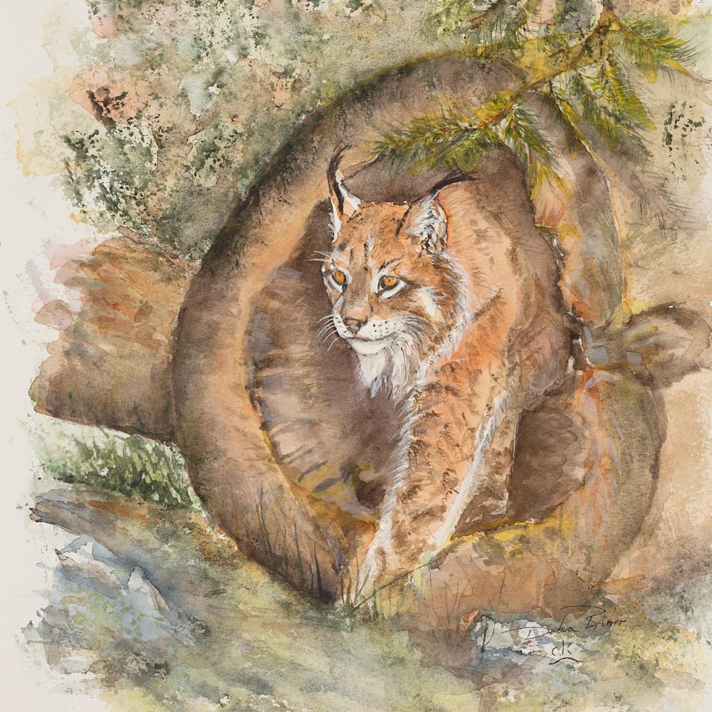 Canadian lynx hires qd8vfb