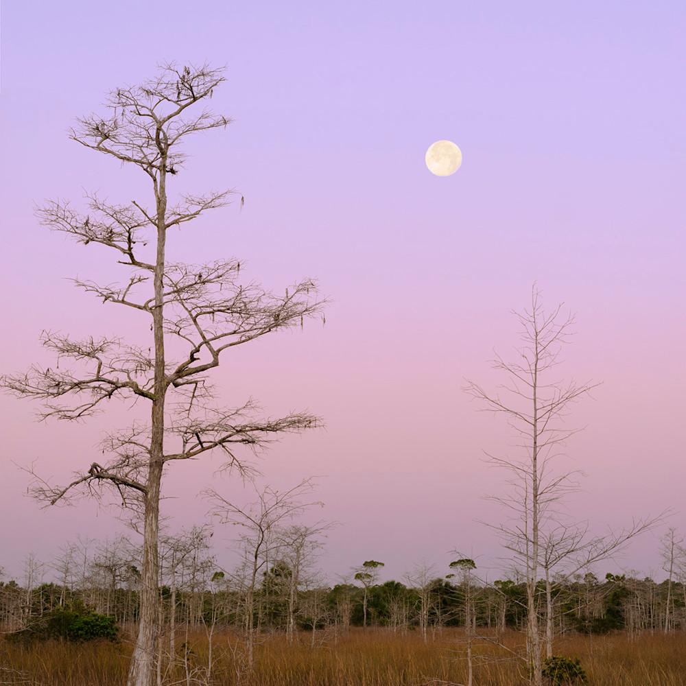 Cypress revealed geqh74