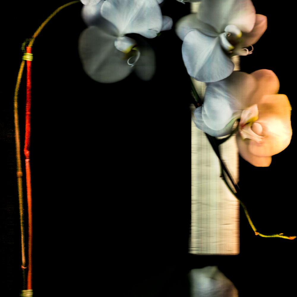 Orchidaceae edit iewg1u
