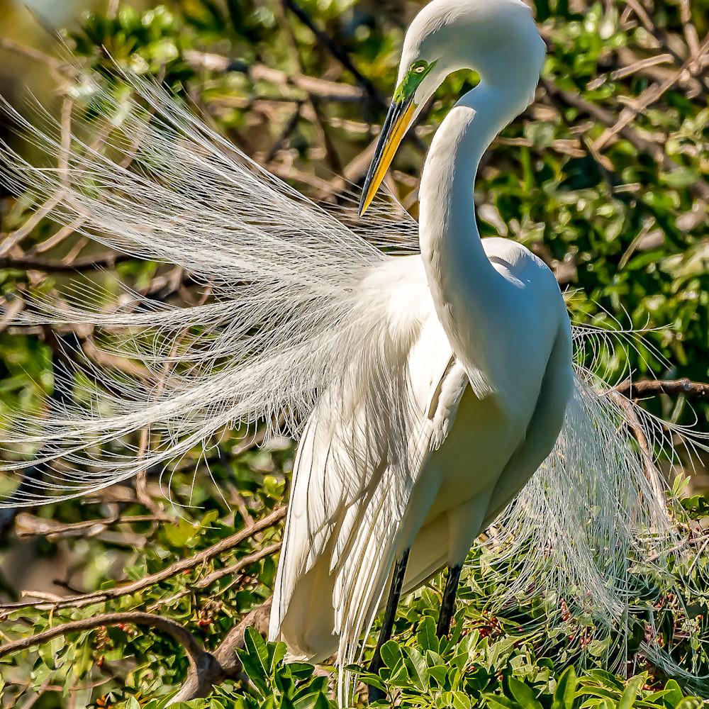 Feathers 5697 kiytyw