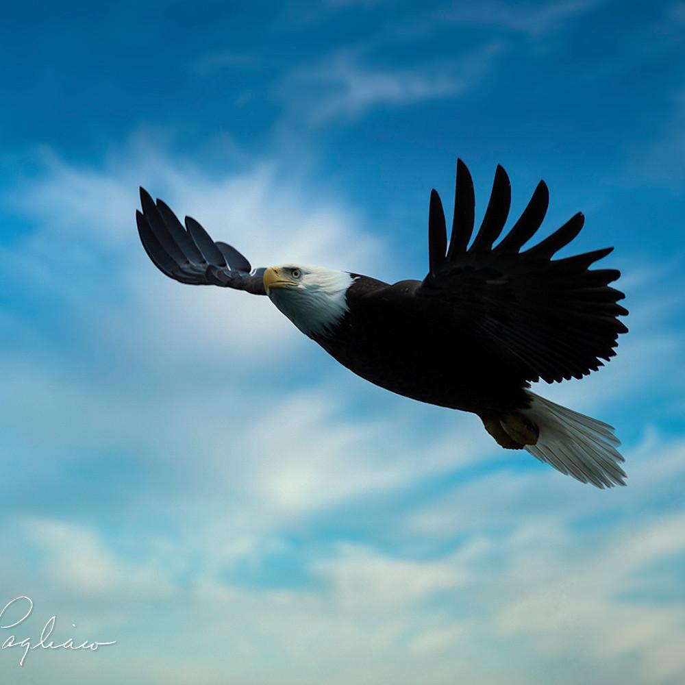 Eagle blue sky v6hqd8