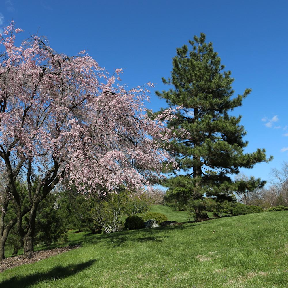 Elizabethmoore cherrytree 6098 fwhtgl