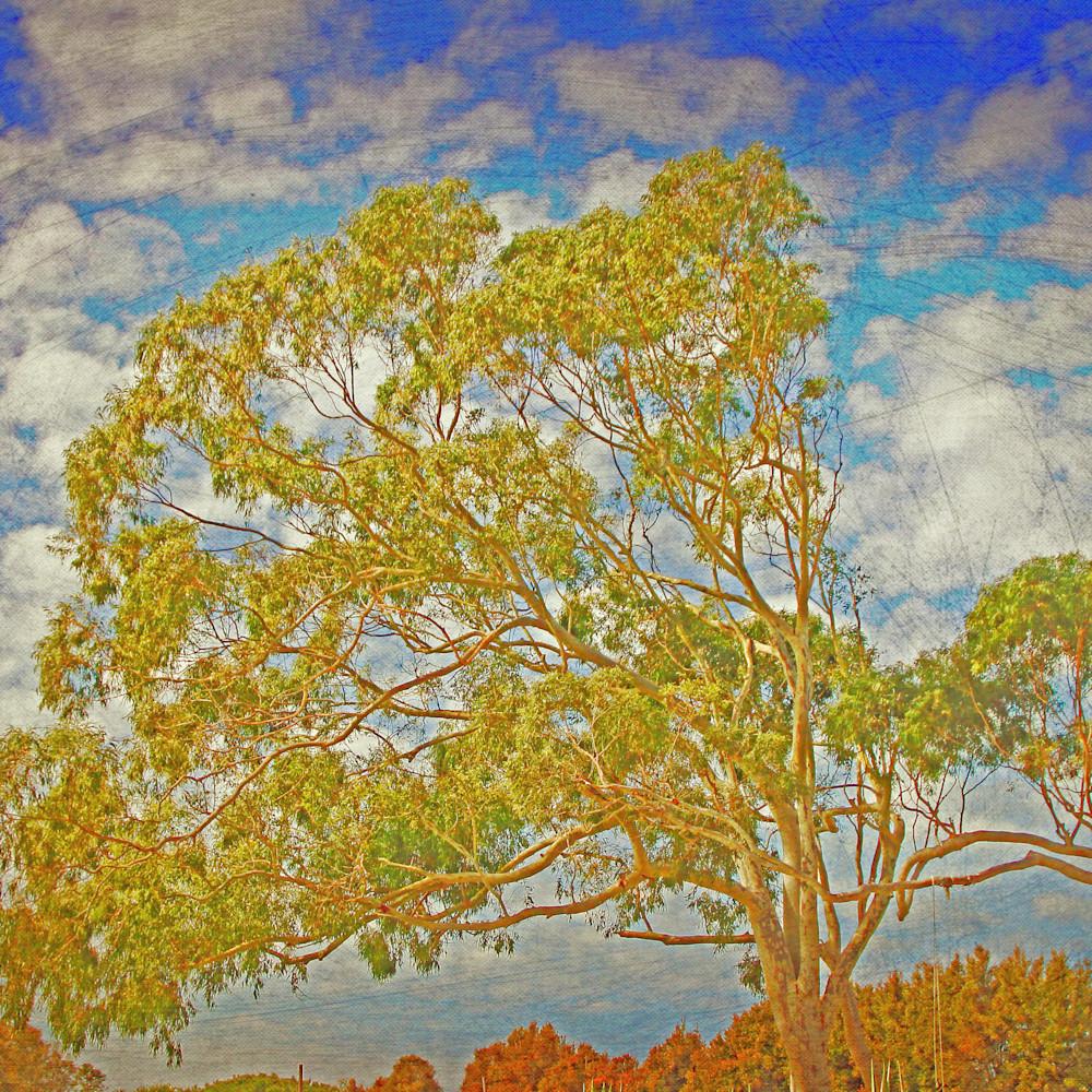 602 tree of life backdrop ii 300dpi watermarked a2opwc