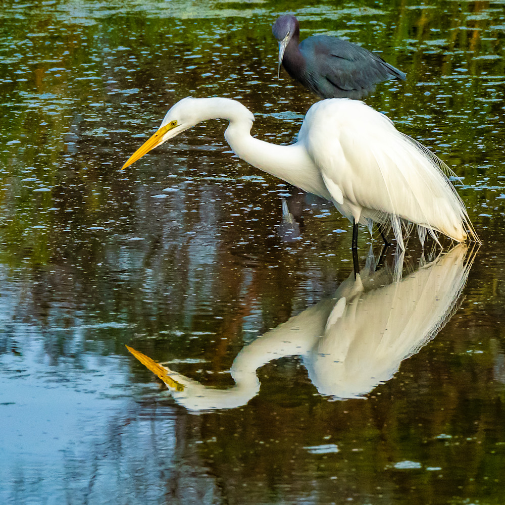 Fishing egret 3944 wkaetc