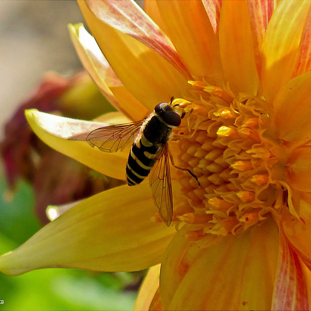 Sweet nectar fugoeb