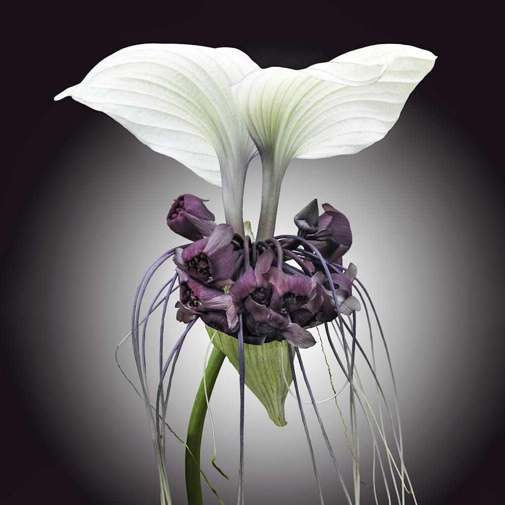 White bat plant tsnbhs