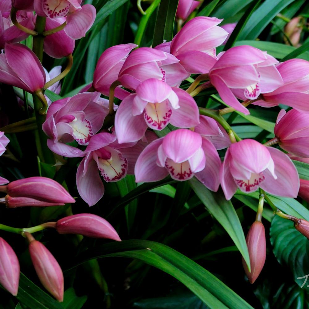 Beautiful flowers up0naf