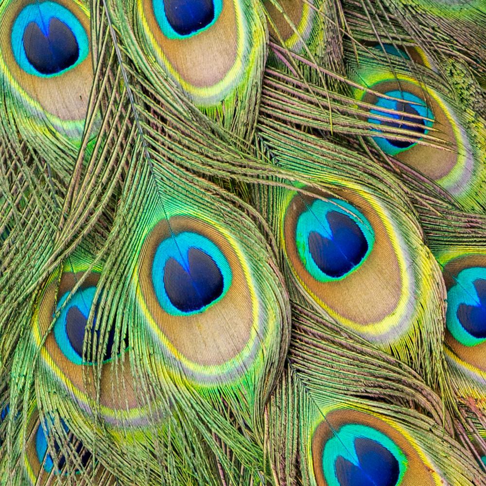 Living peacock abstract 2x3 tdsuyj