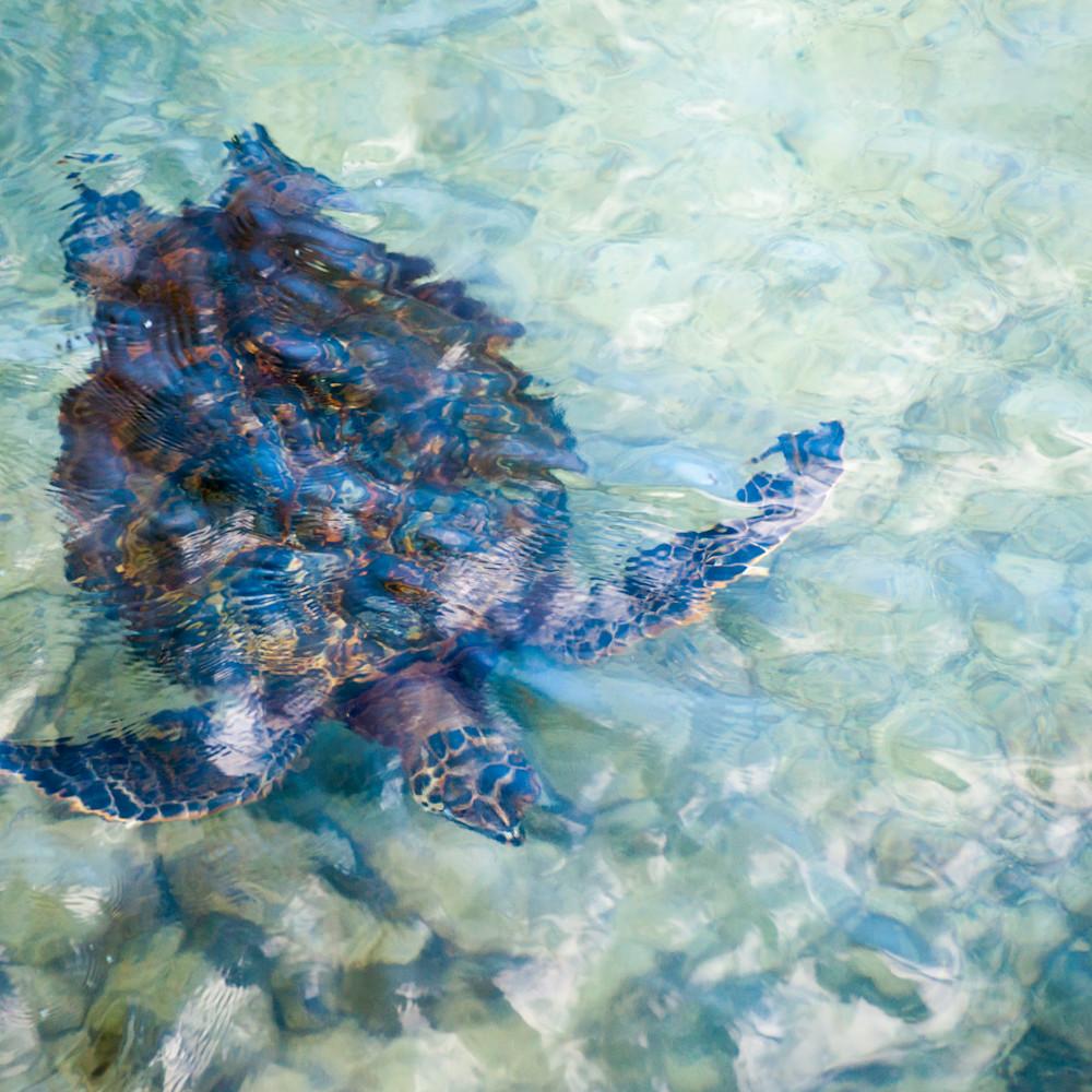 Watercolor turtle 4x3 gamyzz