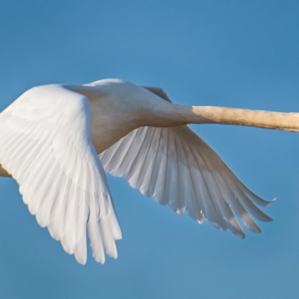 Sengekontacket swan 1 p7zu57