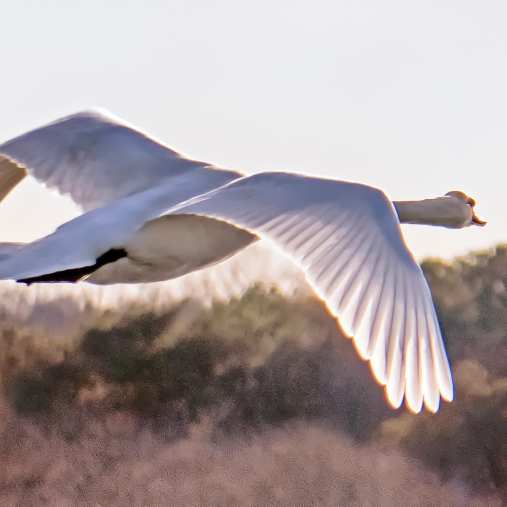 Sengekontacket swan 2 f1vl8q