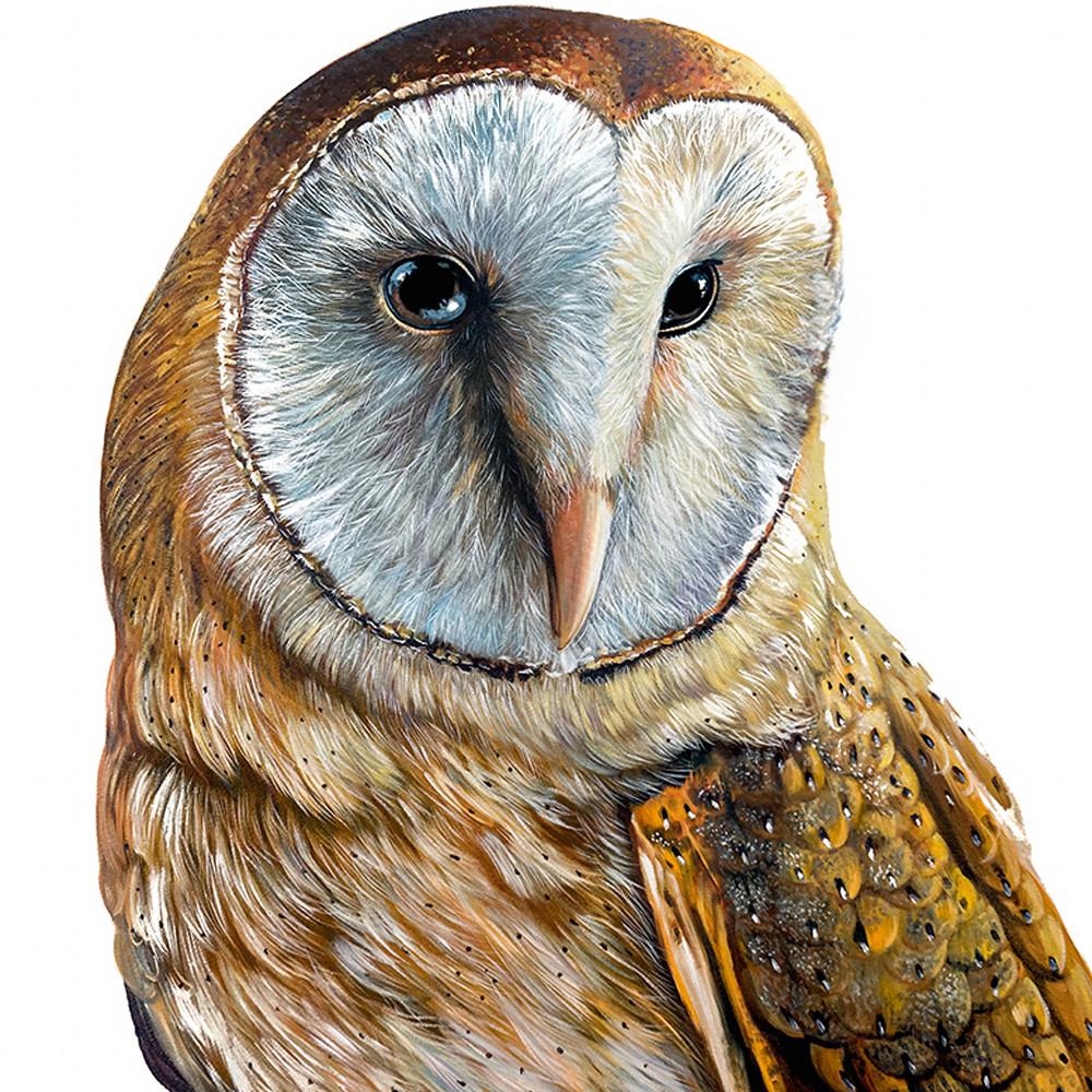 Sophie   barn owl suw2sm