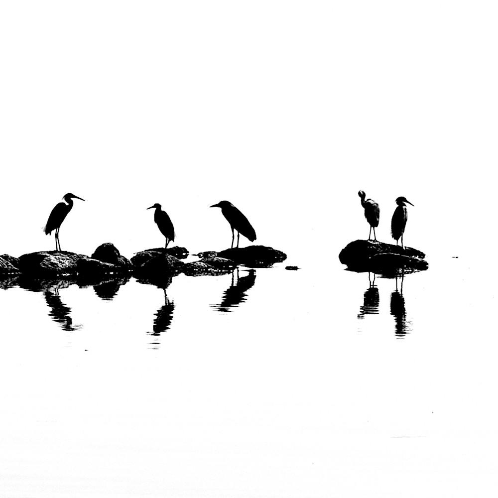 Wildlife birds salton sea california aqxw5z