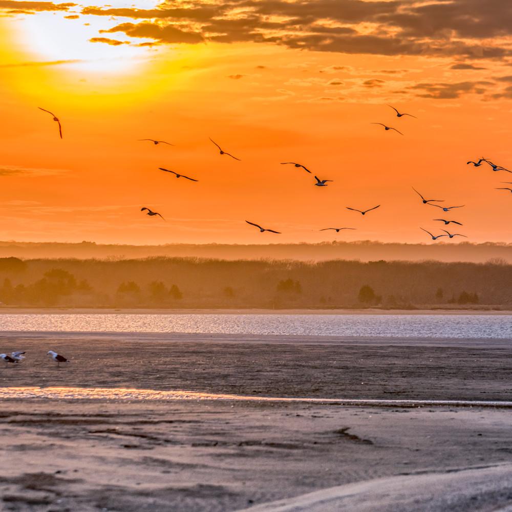 Long point seagulls kurroa