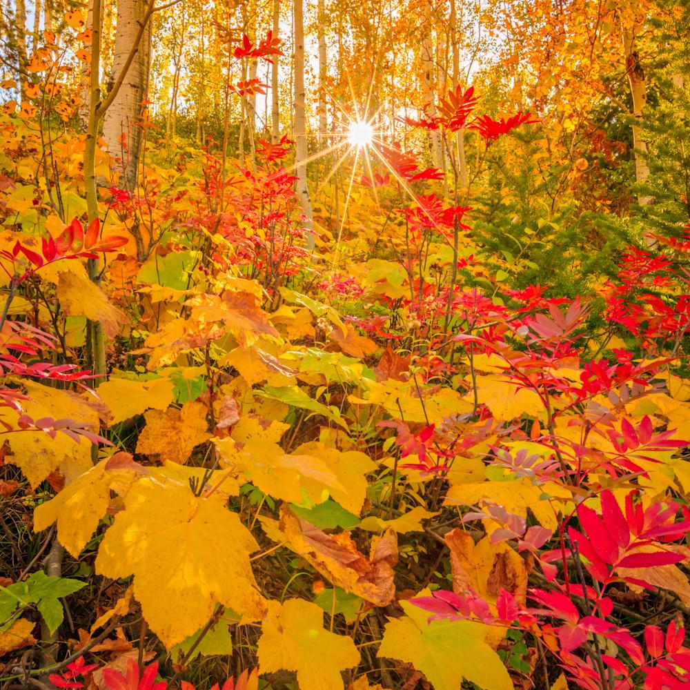 Soapstone fall leaves asf is4tla