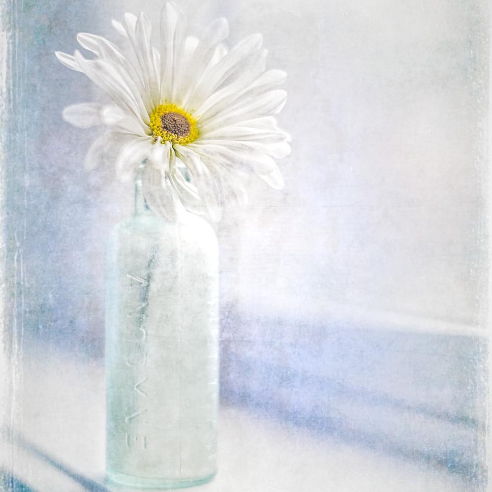 Dl 160119 daisy 4701db05x bkxjvm