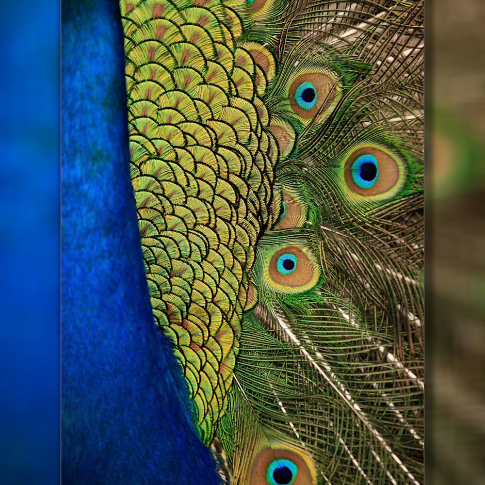 Peacock abstract 3d b9tsk6