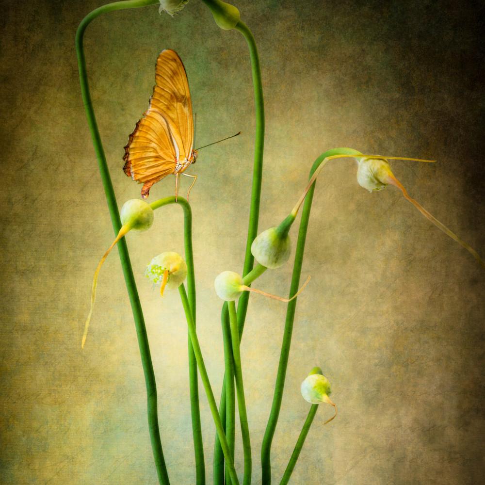 Dl 180721 garlic flowers 6991 edit eokoi3