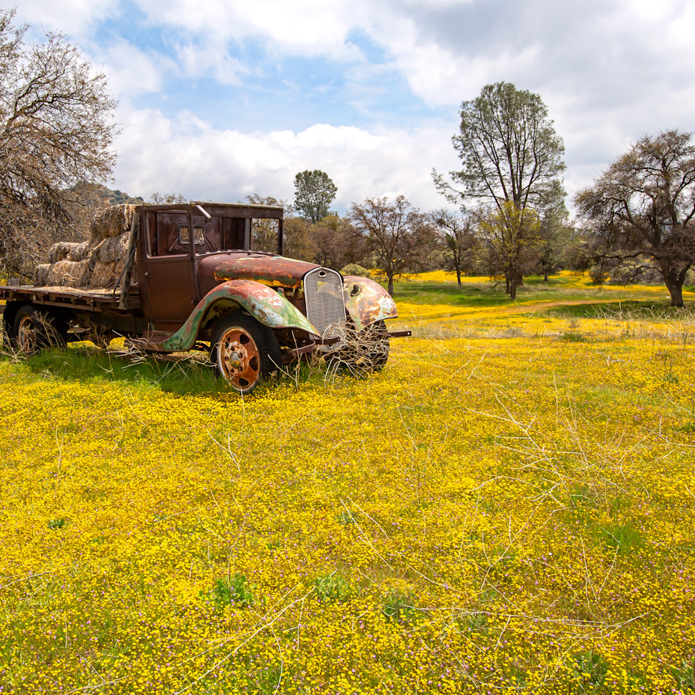 Flatbed floral meadow fwxqpm