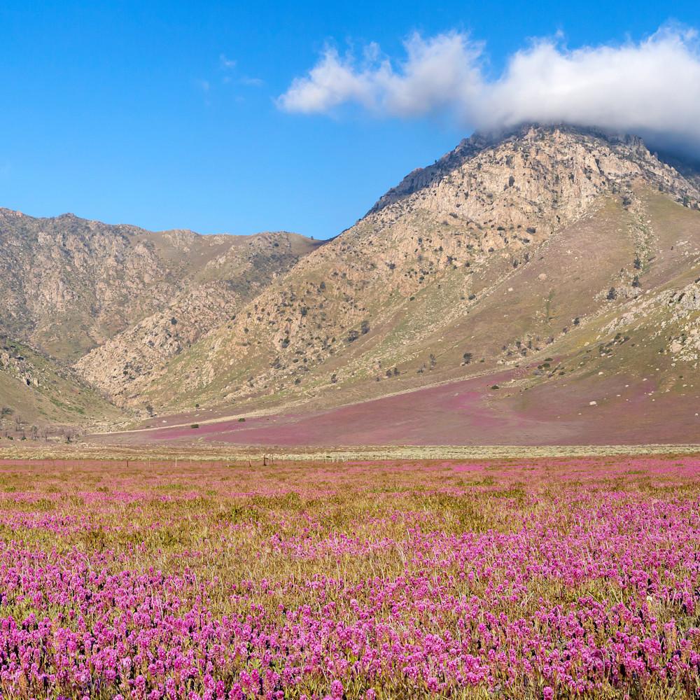 Eastern sierra bloom u4plvf