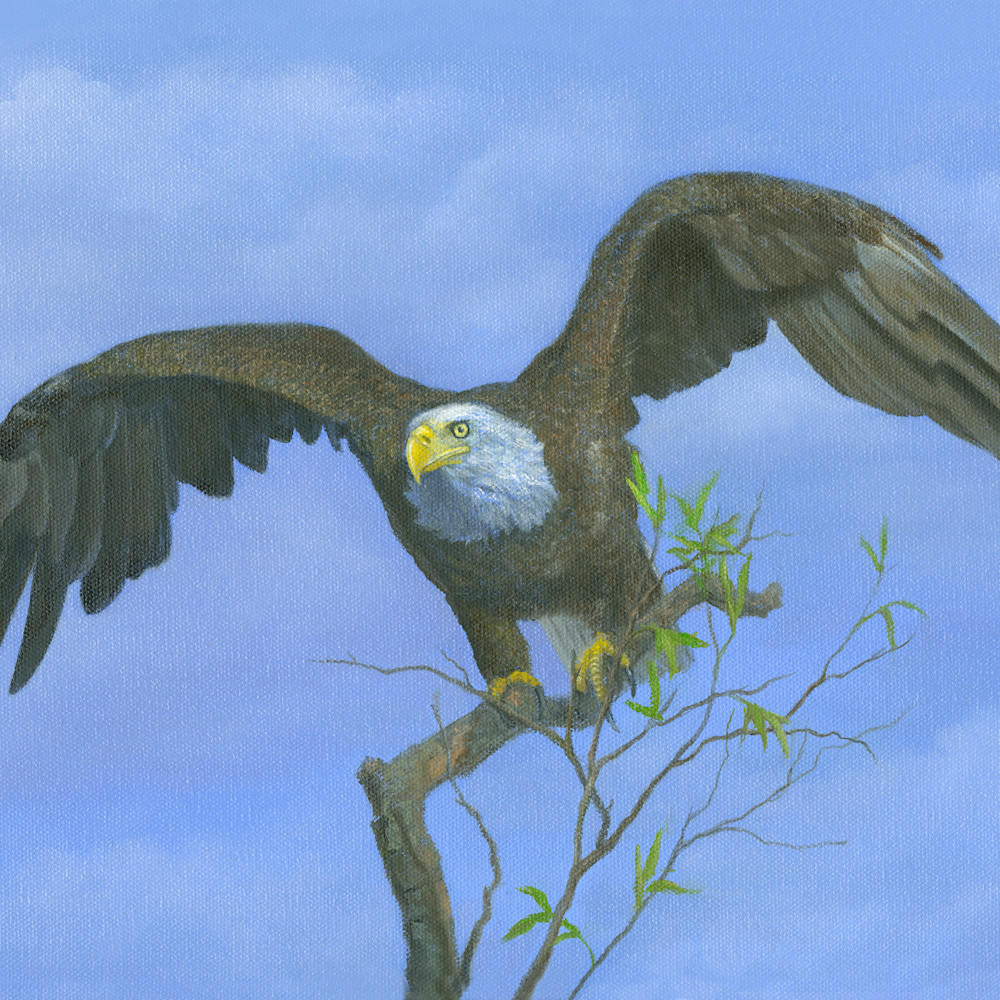 Eagle.timetohunt ghro17