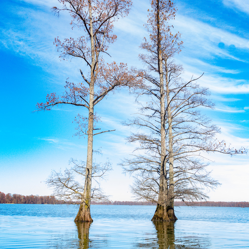 Cypress trees reflection 478fs healthcare art a0e4tr