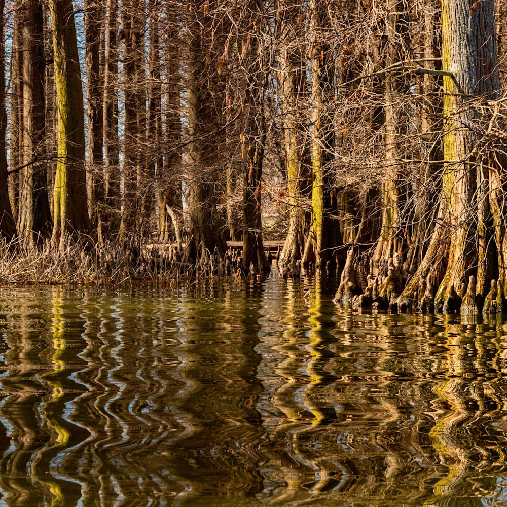 Cypress trees reflection reelfoot lake 5472fs healthcare art mbunc4