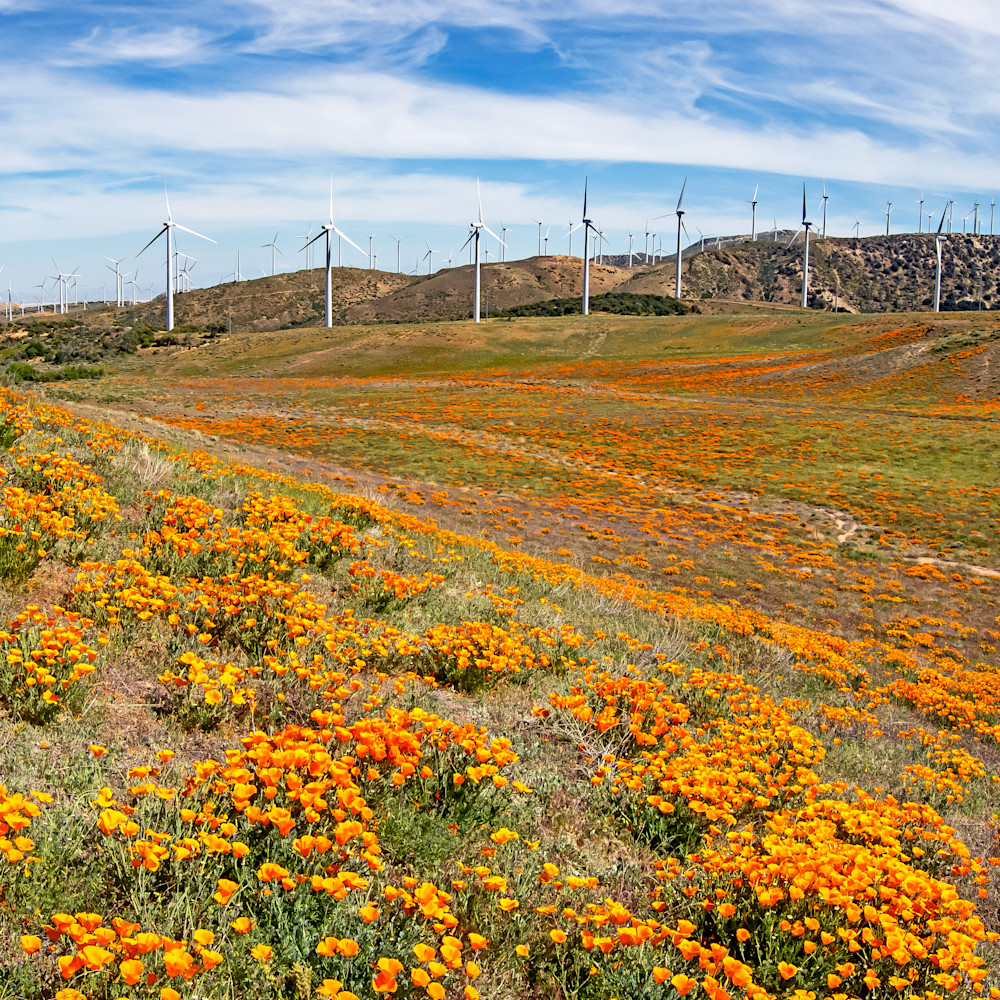 Windy valley poppyscape pjwi59