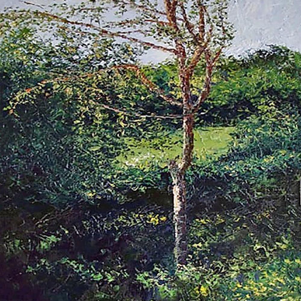 Poplar tree 2 jkyzxf