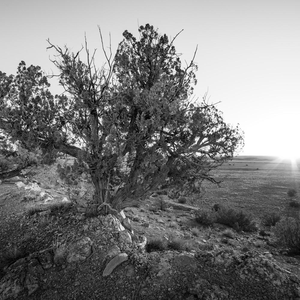 Andy crawford photography desert sunrise t1gtxx