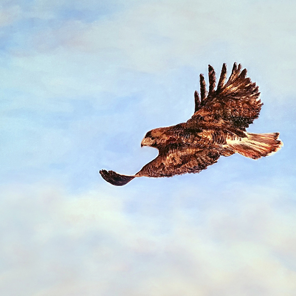 Hawk to print 24x36 new colour300dpi qtw6vr