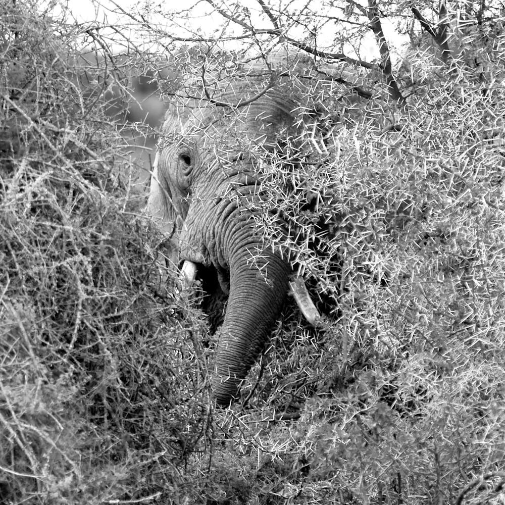 Elephant4 tke1cj