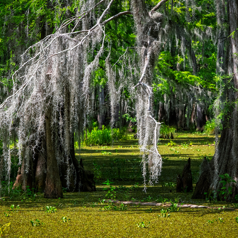 Andy crawford photography lake martin swamp through the veil nm7bft